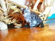 Pika's second litter, Enka