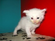 Pika's second litter, Edvard