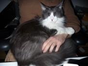 Pika's third litter,Gal Lileo.