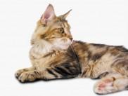 Ida je čudovita in zelo prisrčna mačka.