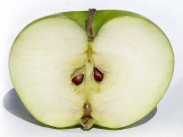 Drevo jabolka <i>(Malus spp.)</i>